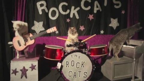 http://s.wat.tv/image/groupe-rock-avec-animaux_3hnph_1hp722.jpg